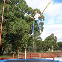 Bungee Tramps